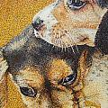Beagle Puppies by Judy Skaltsounis