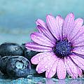 Blueberries And Daisy by Sandra Cunningham