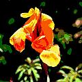 Canna In Summer by Dorrie Pelzer