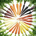 Carrot Pigmentation Variation by Science Source