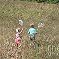 Children Collecting Insects by Ted Kinsman