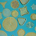 Close View Of Diatoms by Darlyne A. Murawski