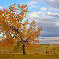 Country Autumn Landscape by James BO  Insogna