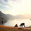 Deer At Sunset by Pixel  Chimp