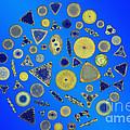 Diatom Arrangement by M I Walker