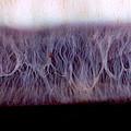 Digital Inversion Of Human Eye by Raul Gonzalez Perez