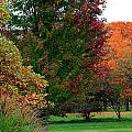 Distant Fall Color by Scott Hovind