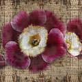 English Primrose  by Barbara  White