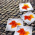 Fallen Autumn  Prints by Carlos Caetano