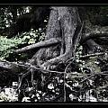 Fantasy Roots by Linda Olsen