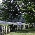 Farmland Shade Appomattox Virginia by Teresa Mucha