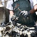 Fisherman Separating Clumps Of Oysters by Tyrone Turner