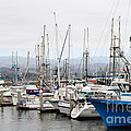 Fishing Boats In Pillar Point Harbor At Half Moon Bay California . 7d8208 by Wingsdomain Art and Photography