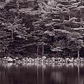 Forest At Jordan Pond Acadia Bw by Steve Gadomski