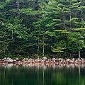 Forest At Jordan Pond Acadia by Steve Gadomski