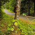 Forest Escape by Idaho Scenic Images Linda Lantzy