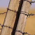 Gate Posts Join A Barbed Wire Fence by Gordon Wiltsie