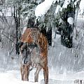 Great Dane Rufus Looking Into A Blizzard by Lila Fisher-Wenzel