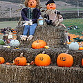Halloween Pumpkin Patch 7d8476 by Wingsdomain Art and Photography