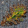 Leaf On The Sidewalk by Robert Ullmann