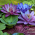 Lilies No. 27 by Anne Klar