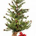 Little Christmas Tree With Red Ribboned Gifts On White  by Sandra Cunningham
