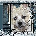Look In Her Eyes - Cairn Terrier by Renae Laughner