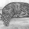 Lying Low - Doberman Pinscher Dog Art Print by Kelli Swan