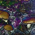 Magic Mushrooms by Barbara S Nickerson