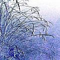 Misty Blue by Will Borden