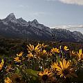 Mountain Flowers by Charles Warren