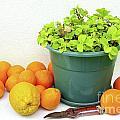 Oranges And Vase by Carlos Caetano