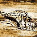 Painted Seashell by Marsha Heiken