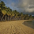 Palm Trees Line A Dominican Republic by Raul Touzon