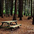 Picnic Table by Carlos Caetano