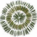 Pine Needle Flower by David Esslemont