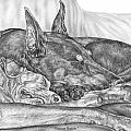 Pleasant Dreams - Doberman Pinscher Dog Art Print by Kelli Swan