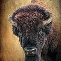 Portrait Of A Buffalo by Tamyra Ayles