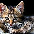 Posing Kitty by Joe Myeress