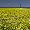 Prairie Generations by Royce Howland