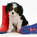 Puppies With A Childs Rain Boots by Jane Burton