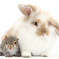 Rabbit And Squirrel by Mark Taylor