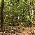 Rain Forest by John Buxton