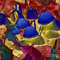 Rainbow Mushrooms by Erica Hanel