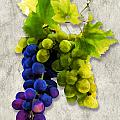 Red And White Grapes by Elaine Plesser