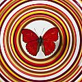 Red Butterfly On Plate With Many Circles by Garry Gay