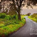 Road On Woods by Carlos Caetano