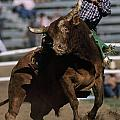 Rodeo Competitor In A Steer Riding by Chris Johns