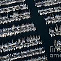 Sailboats At Wharf by Sami Sarkis