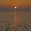 Seagull At First Light by Gary Eason